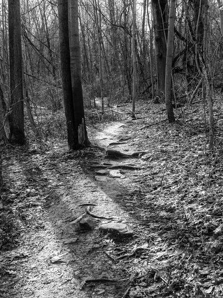 path 011118-1.jpg
