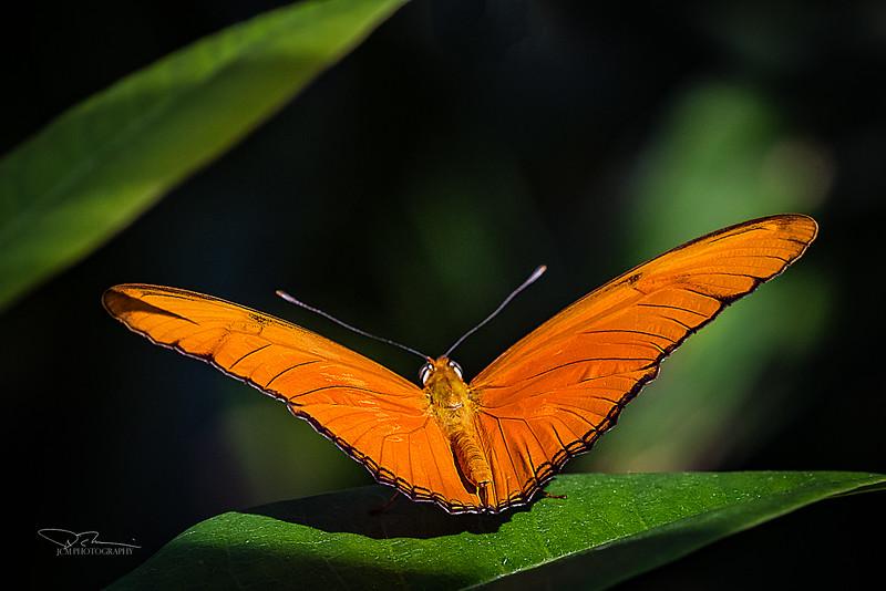 JM8_8956 orange sharp r1.jpg