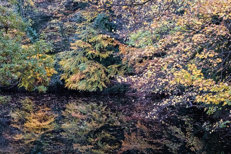 Knaresborough 3 Nov 18-18.jpg