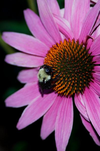 Bee and Flower 3.jpg