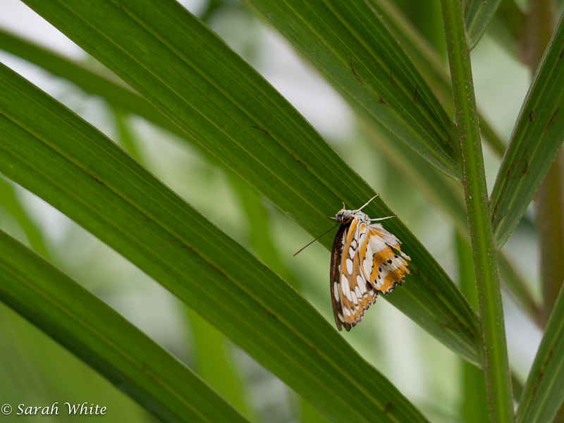 140503_ButterflyHouse_470.jpg