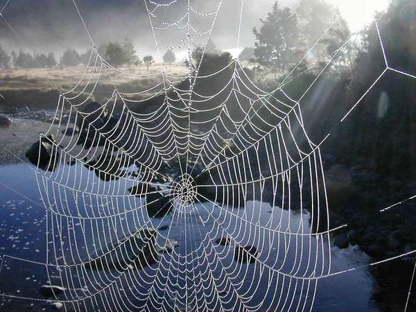 620_Spider_web_2608.JPG