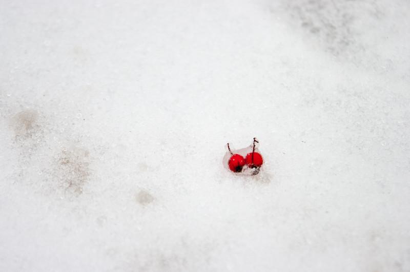 20110201-Snowmageddon-4291.jpg