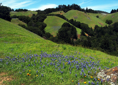 Mt. Tamalpais Wildflowers - April 12, 2009
