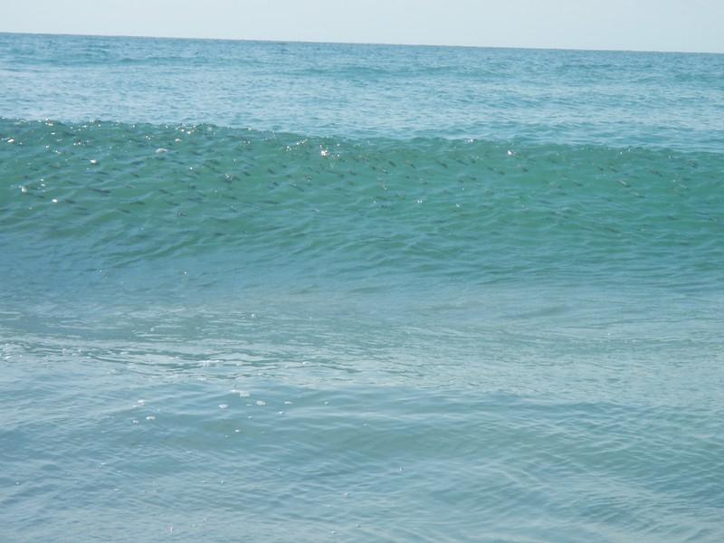 Mullet in Wave.jpg