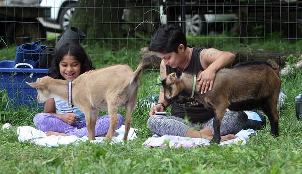 Goat yoga for kids in Bedford 062919