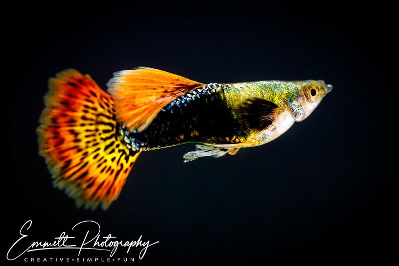 20200208-Fish-7.jpg