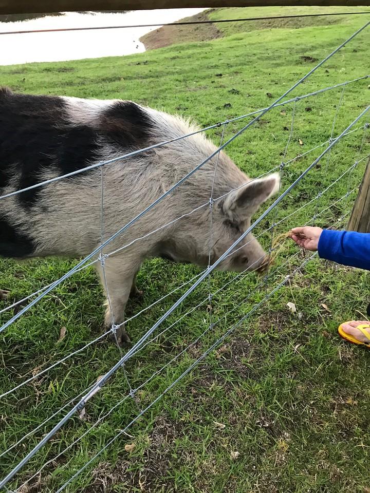 Taunton Farm Holiday Park