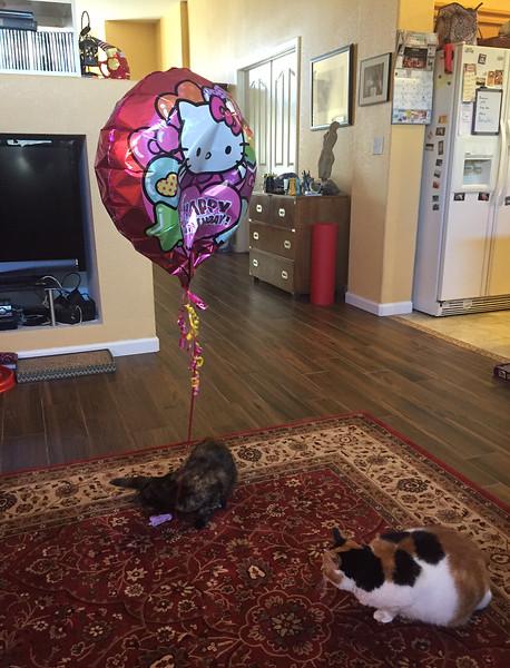 hello kitty birthday.jpg