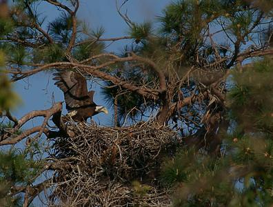 Baytown Eagles - StrangeBehavior_O31510