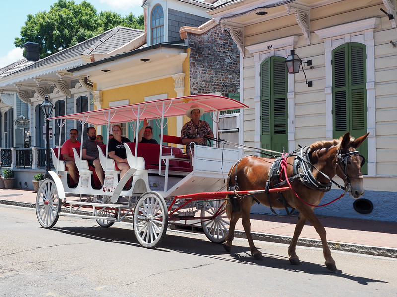 Carriage ride in New Orleans