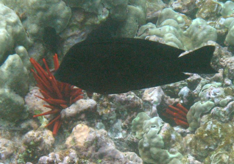 494- 20080416- Hawaii 20-Snorkelling IMG_0721.jpg