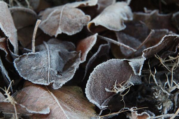 12.24.13 Leaves