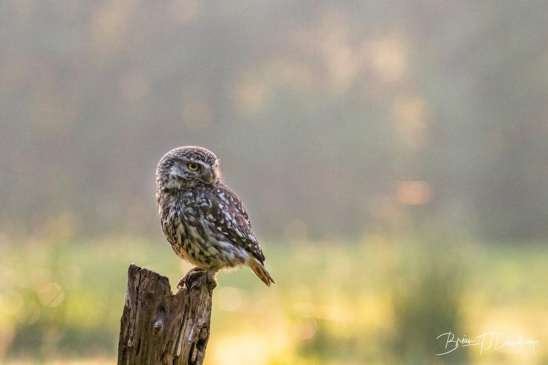 The Little Owl Shoot-6144.jpg