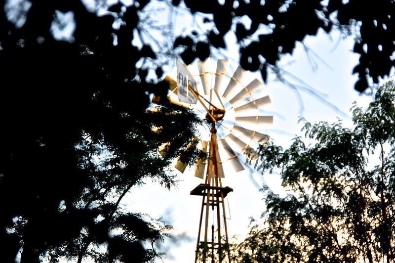Windmill of my mind