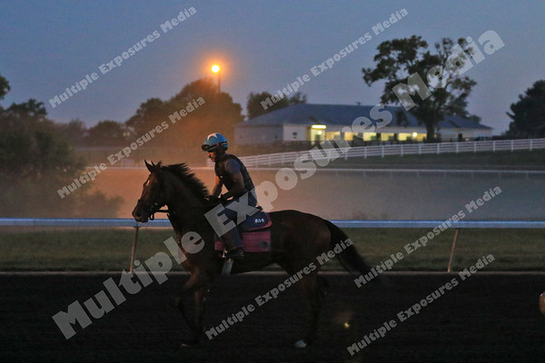 190828 Keeneland Horses and Fog