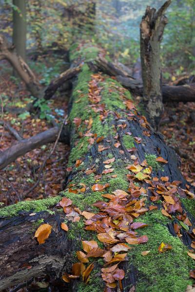 Bisham_Woods-9.jpg