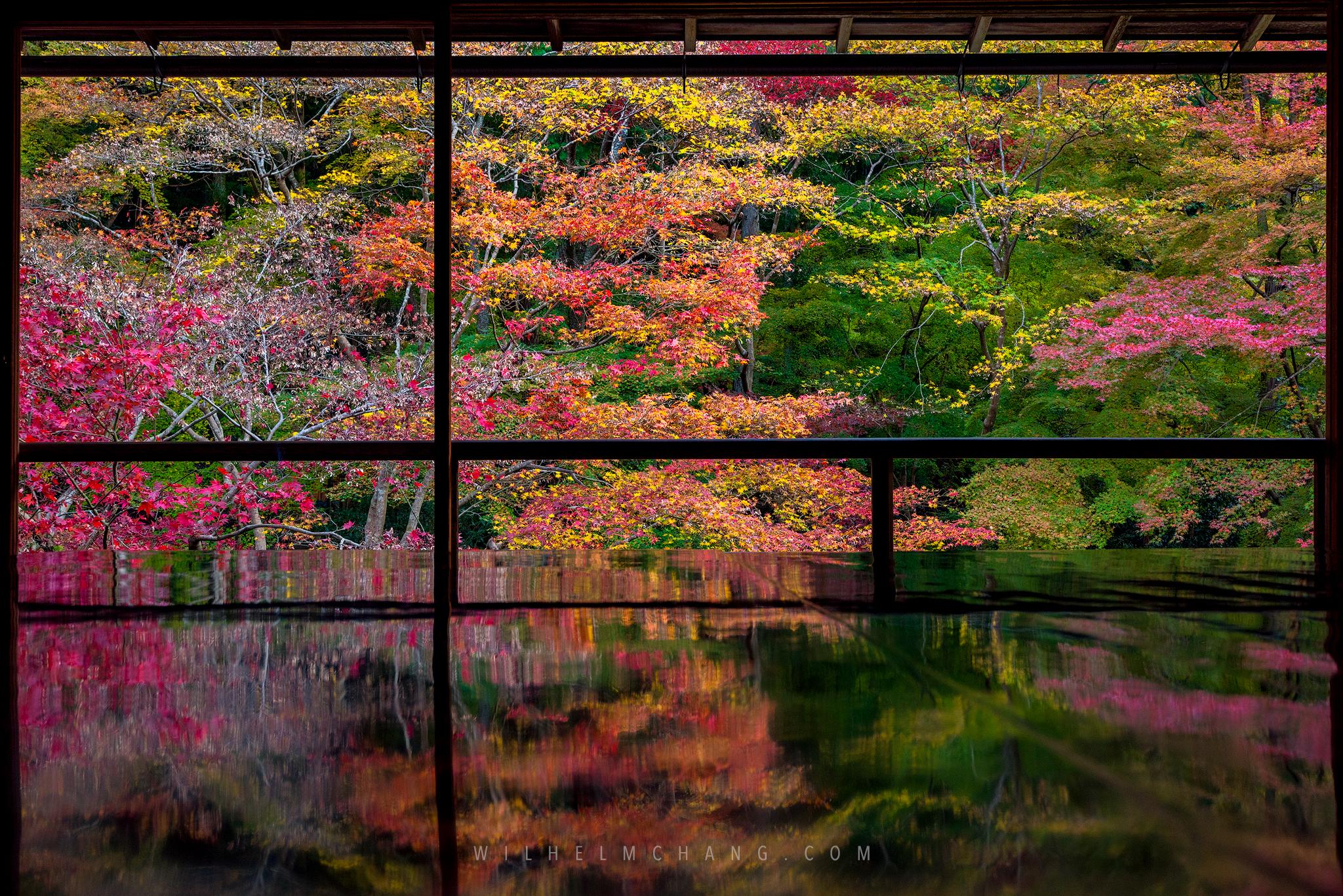 到京都攝影 賞楓特輯(一) 絕美三千院 寶泉院 琉璃光院 by Wilhelm Chang