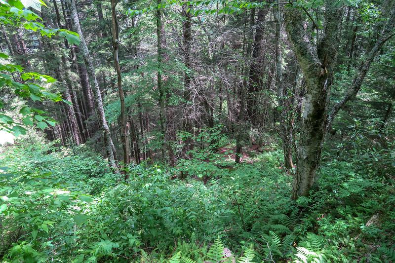 Green Mountain Trail -- 5,220'