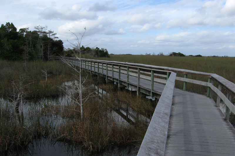 Everglades National Park - Pa-hay-okee Trail  (0.25 mile; d=0.25)
