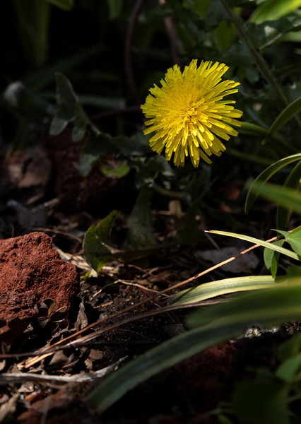 Flower-113