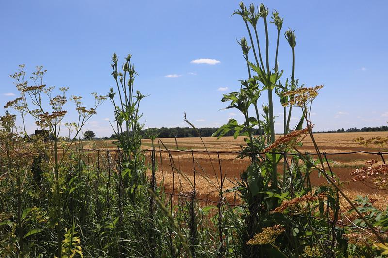 Open field along the Slippery Elm Trail