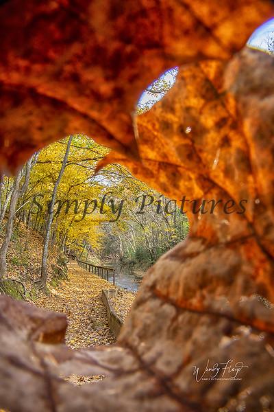 Fall 0181 copy-001.jpg