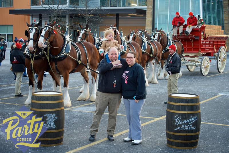 Clydesdale Portraits 205.jpg