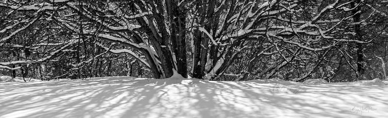 Snowy scene Aug 8,2019 -14_1.jpg