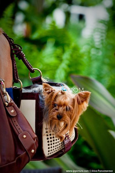 Palm Beach Doggie Fashion Show/ casting