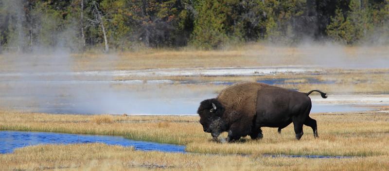 Yellowstone Best of-139.JPG