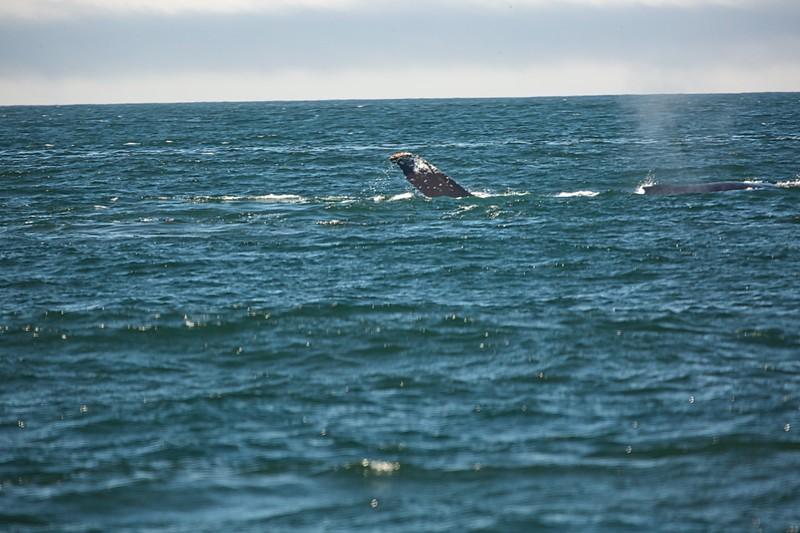Whale watching off Monterey Coast2017-09-20.jpg