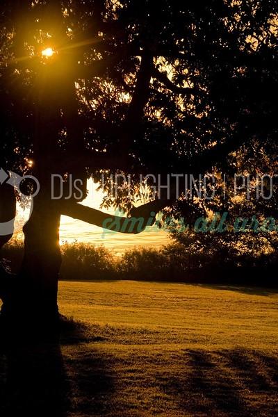 Tree at Sunrise_batch_batch.jpg