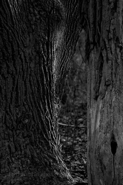 trees bw.jpg