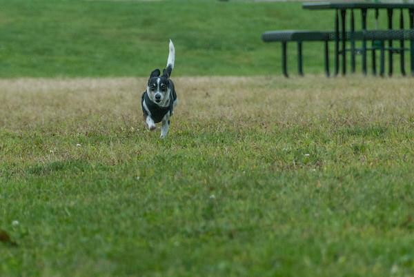 2012-09-22 Denville Dog Park