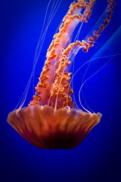 Monterey Bay Aquarium 12.21.08