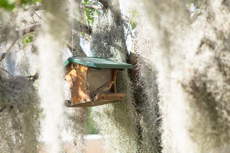 hummingbird-9868.jpg