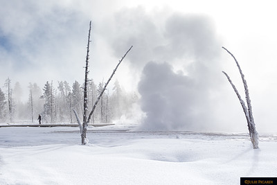 Yellowstone National Park January 2019
