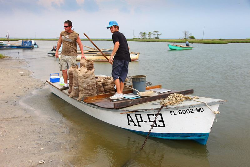 Unloading Oyster Catch