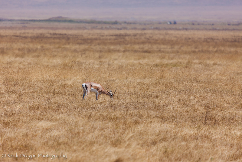Ngorongoro-57.jpg