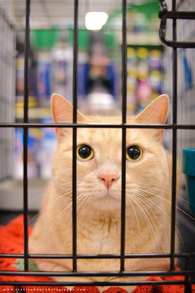 20110611 PetSmart Adoption Event-7.jpg
