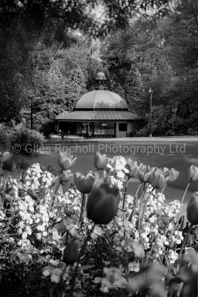 Spring flowers the Valley Gardens, Harrogate, North Yorkshire, United Kingdom