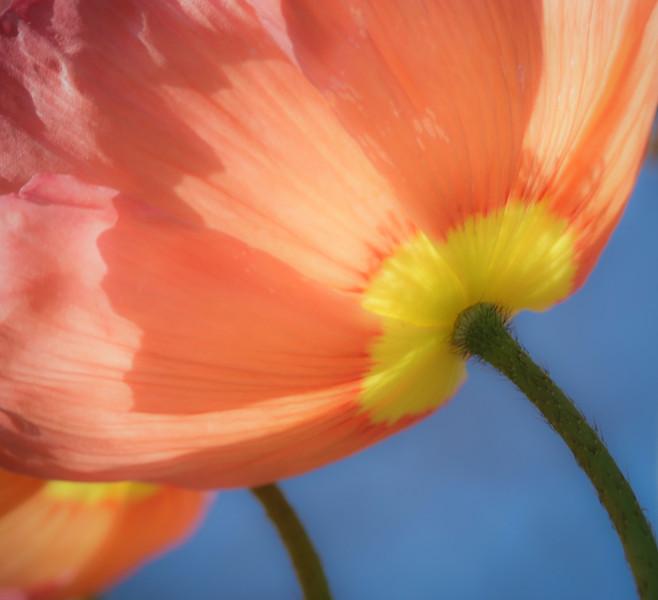 //tinyurl.com/SpringFlingPhotos