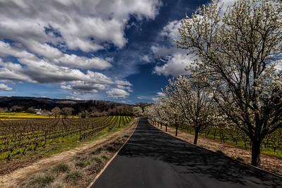 Napa Valley Spring 2021