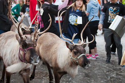 Iditarod Festivities, Anchorage and Nome, AK