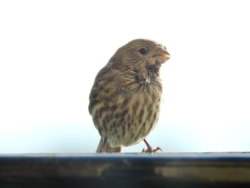 birds (126).JPG