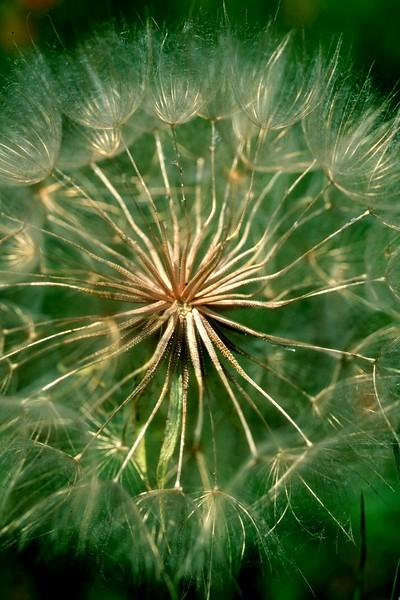 amh FLOWERS (1158).jpg