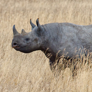 Africa Day 15 (Ngorongoro; Lake Eyasi)