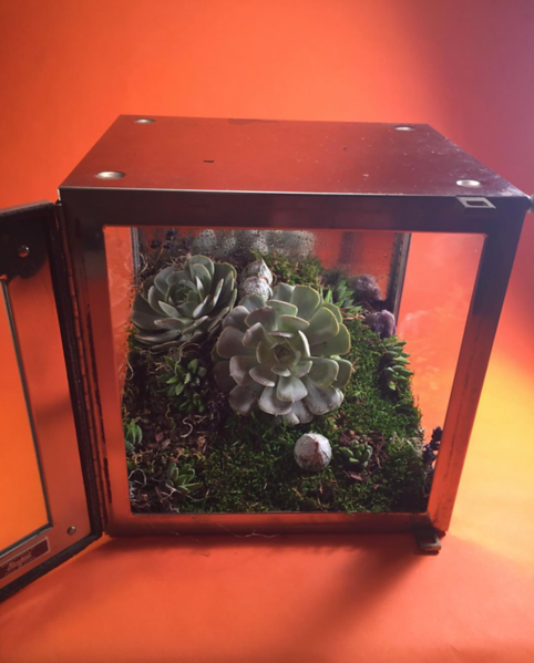 Terrariums and Antiques