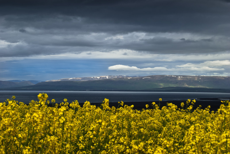 Iceland Colors 1